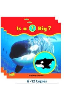 Is a (?) Big? - 6-Pack